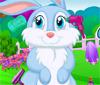 Pet Bunny Grooming